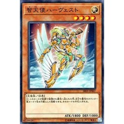 Harvest Angel of Wisdom - SR05-JP007